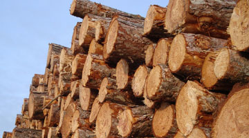 Wood Products Manufacturing Industry